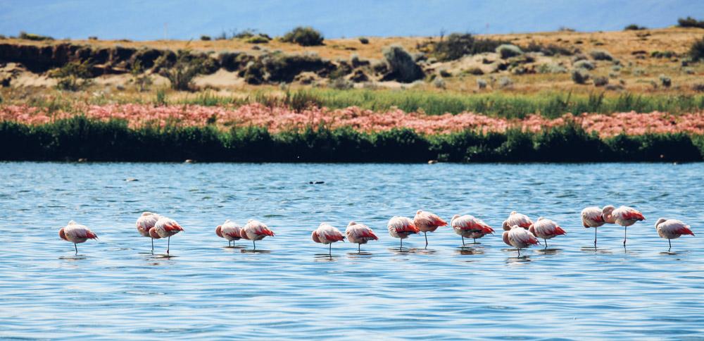 Flamingoes |  Liam Quinn  (edits made)