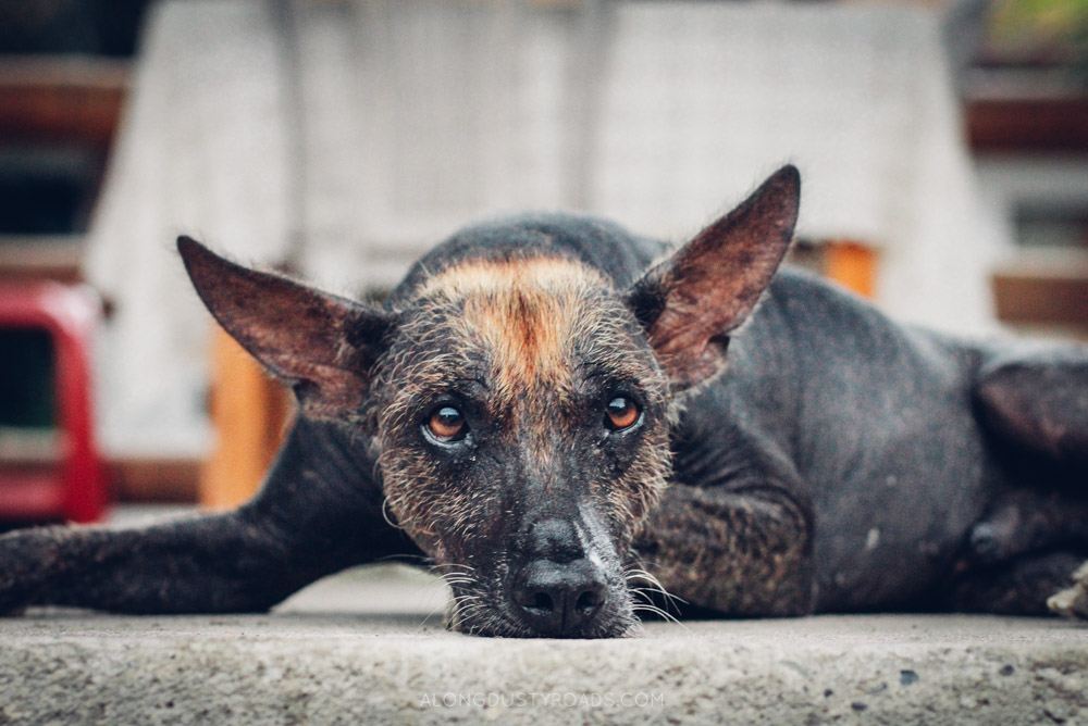 Tips for staying safe in Latin America - street dogs