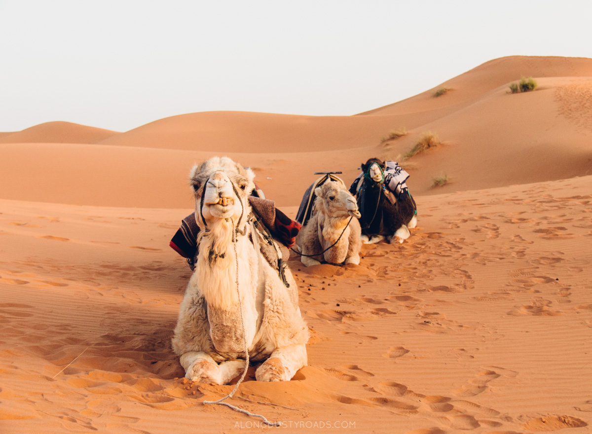 Our Night in the Sahara Desert — Along Dusty Roads