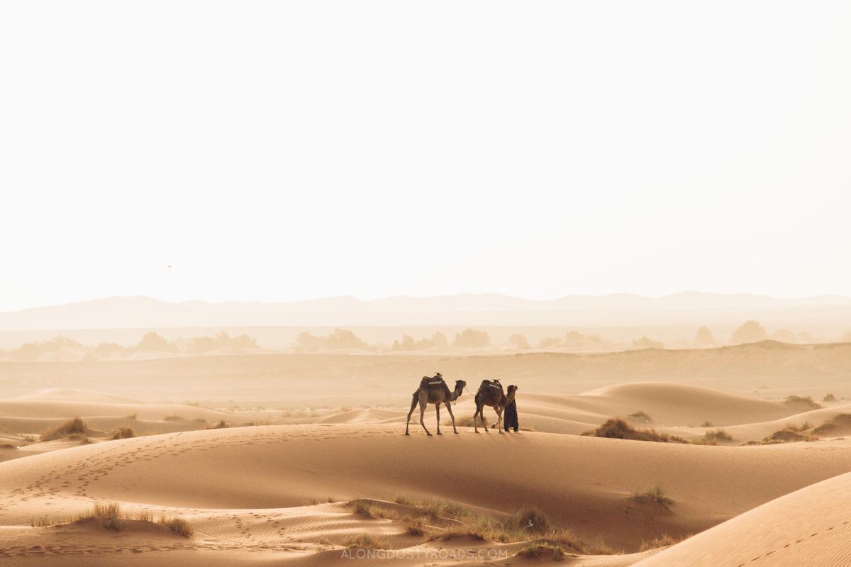 Camels in the Sahara Desert at Sunrise, Merzouga, Morocco