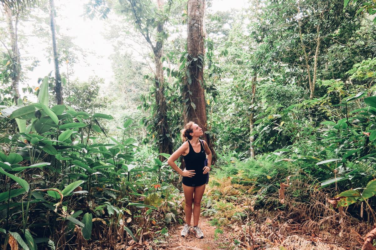 Capurgana rainforest, Colombia