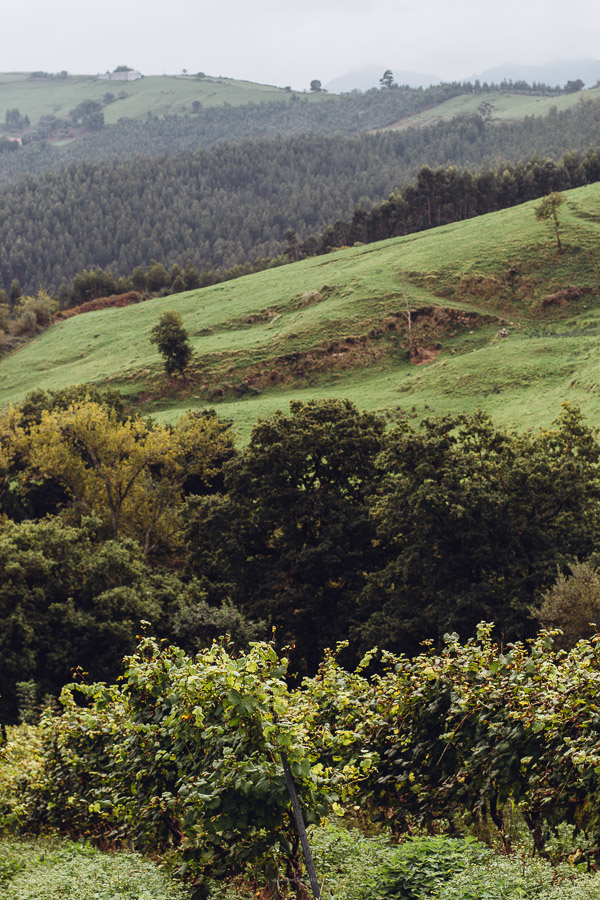 Things to do in Cantabria Spain - Bodegas Vidular