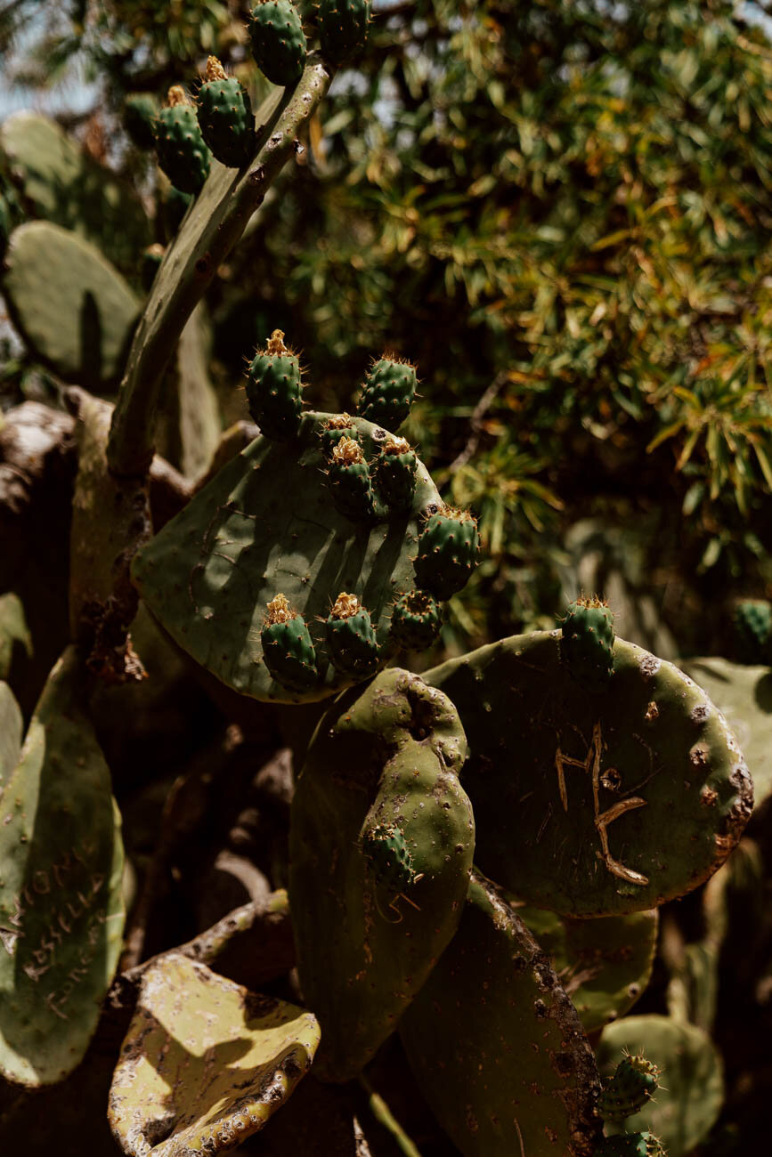 Valley of the Temples, Sicily | Cacti
