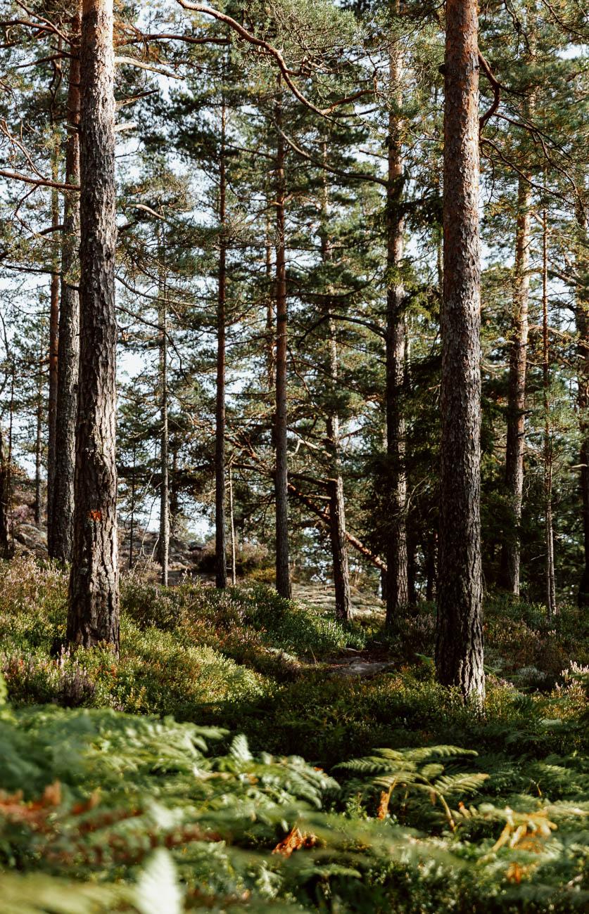 A Very West Sweden Summer | Pilgrim's Trail, Upperud