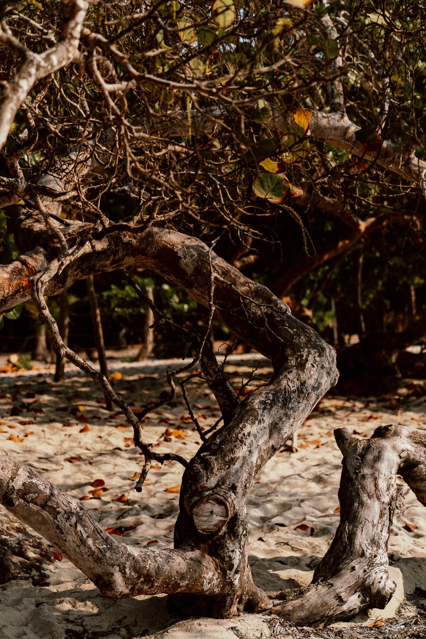 Things to do in Rincon Del Mar | Tour the Mangroves