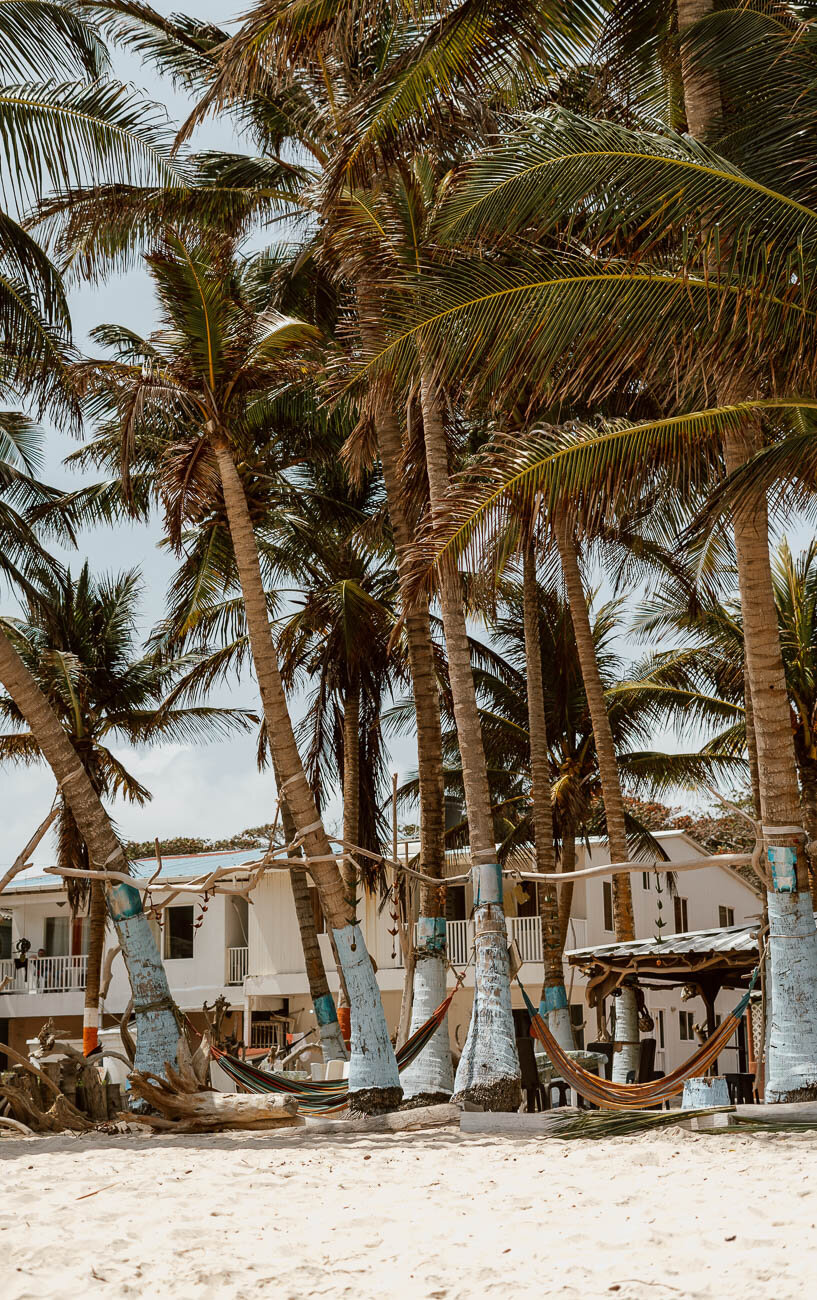 Palm trees and hammocks in San Andres Colombia