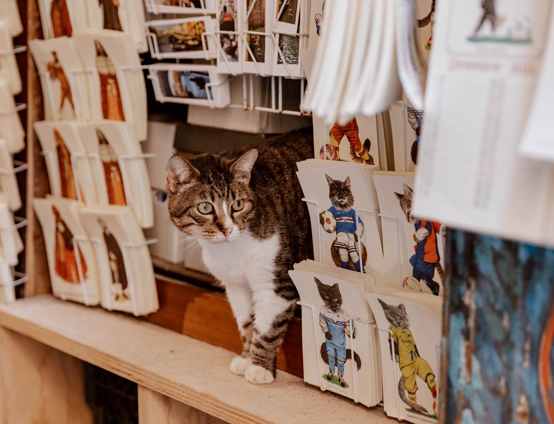 一只猫在Libreria Acqua Alta