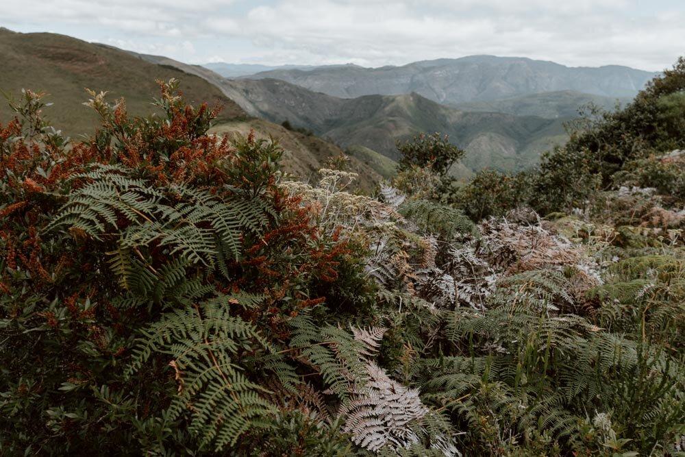 秃鹰-玻利维亚-沿着尘土飞扬的道路- 3. jpg