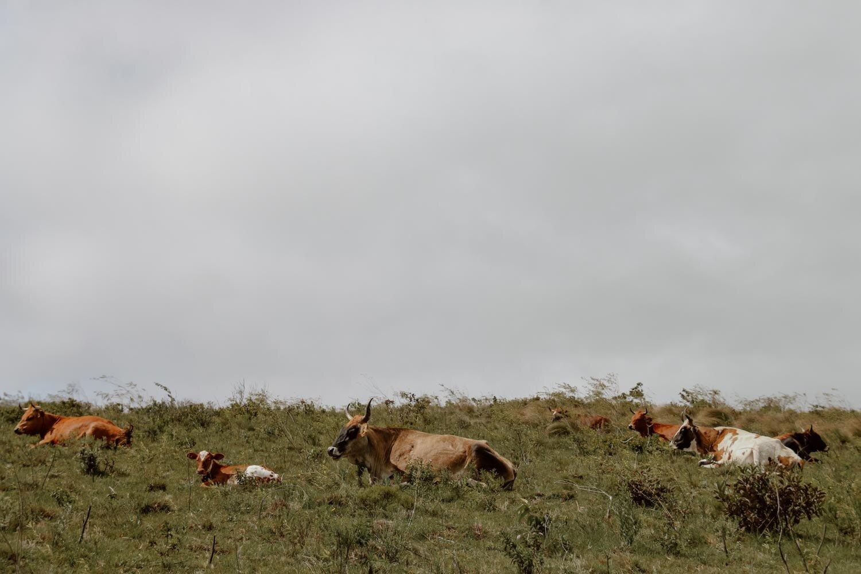 秃鹰-玻利维亚-沿着尘土飞扬的道路- 13. jpg