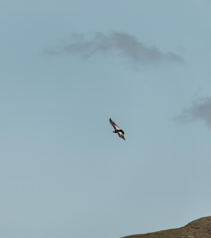 秃鹰-玻利维亚-沿着尘土飞扬的道路- 15. jpg