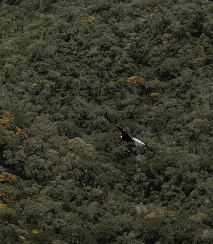 秃鹰-玻利维亚-沿着尘土飞扬的道路- 16. jpg