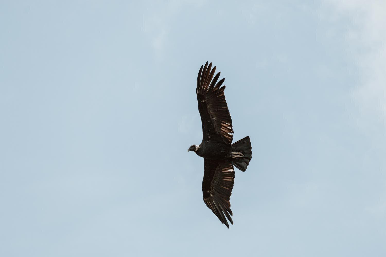 秃鹰-玻利维亚-沿着尘土飞扬的道路- 14. jpg