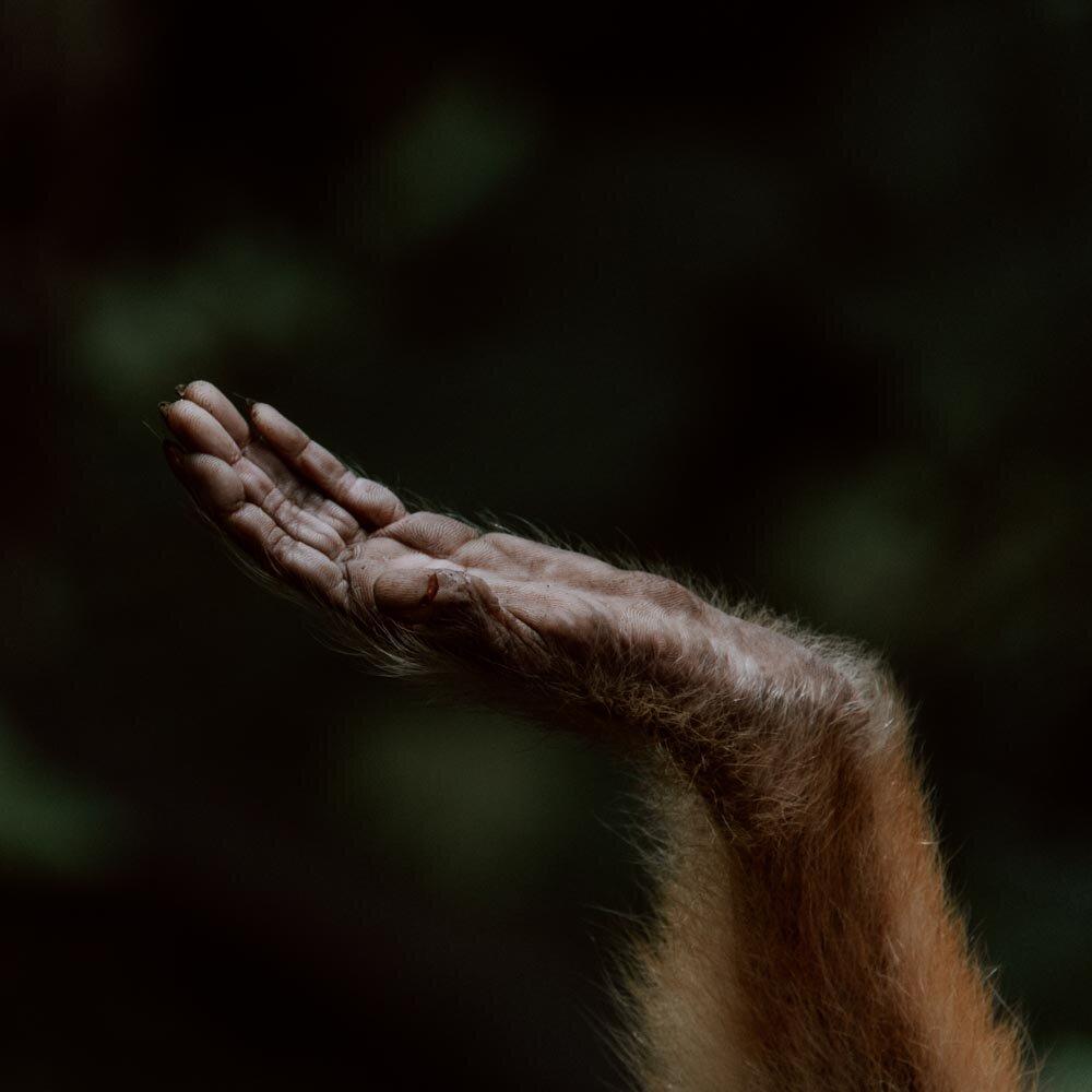 在这里,玻利维亚被遗忘的动物受到了人们的喜爱