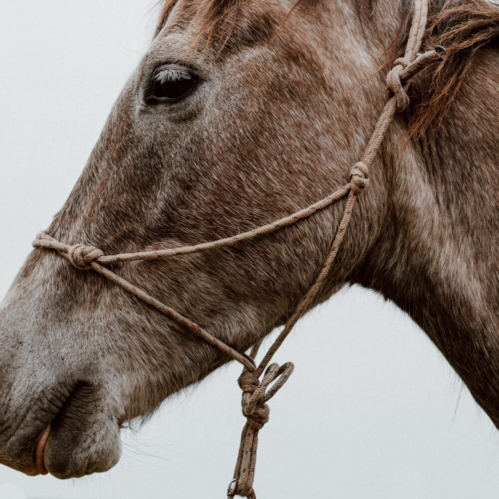 骑马在乌拉圭|一个故事的两个梦想-