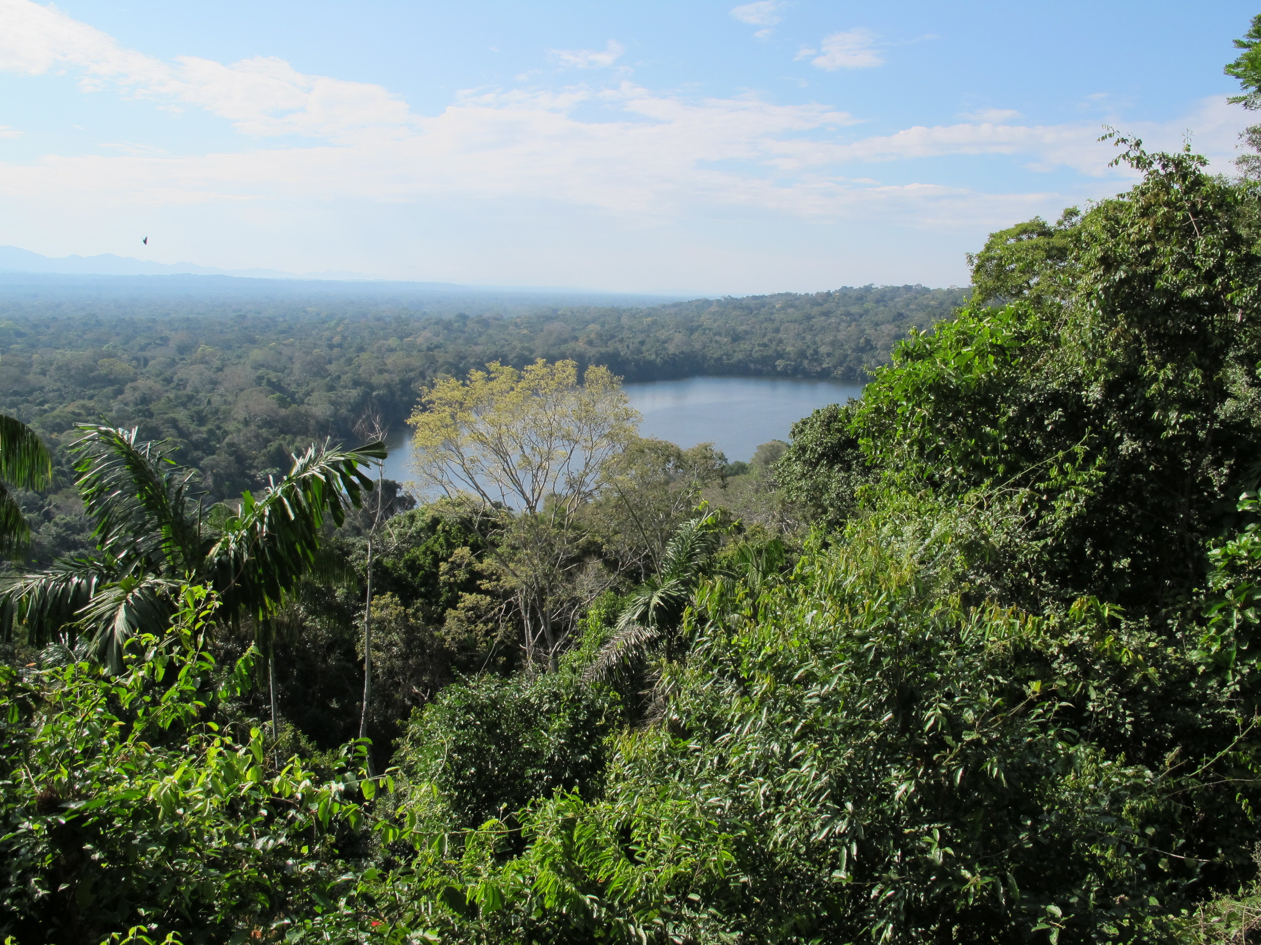 Tree Canopy overlooking the reflective lake, Bolivian Amazon