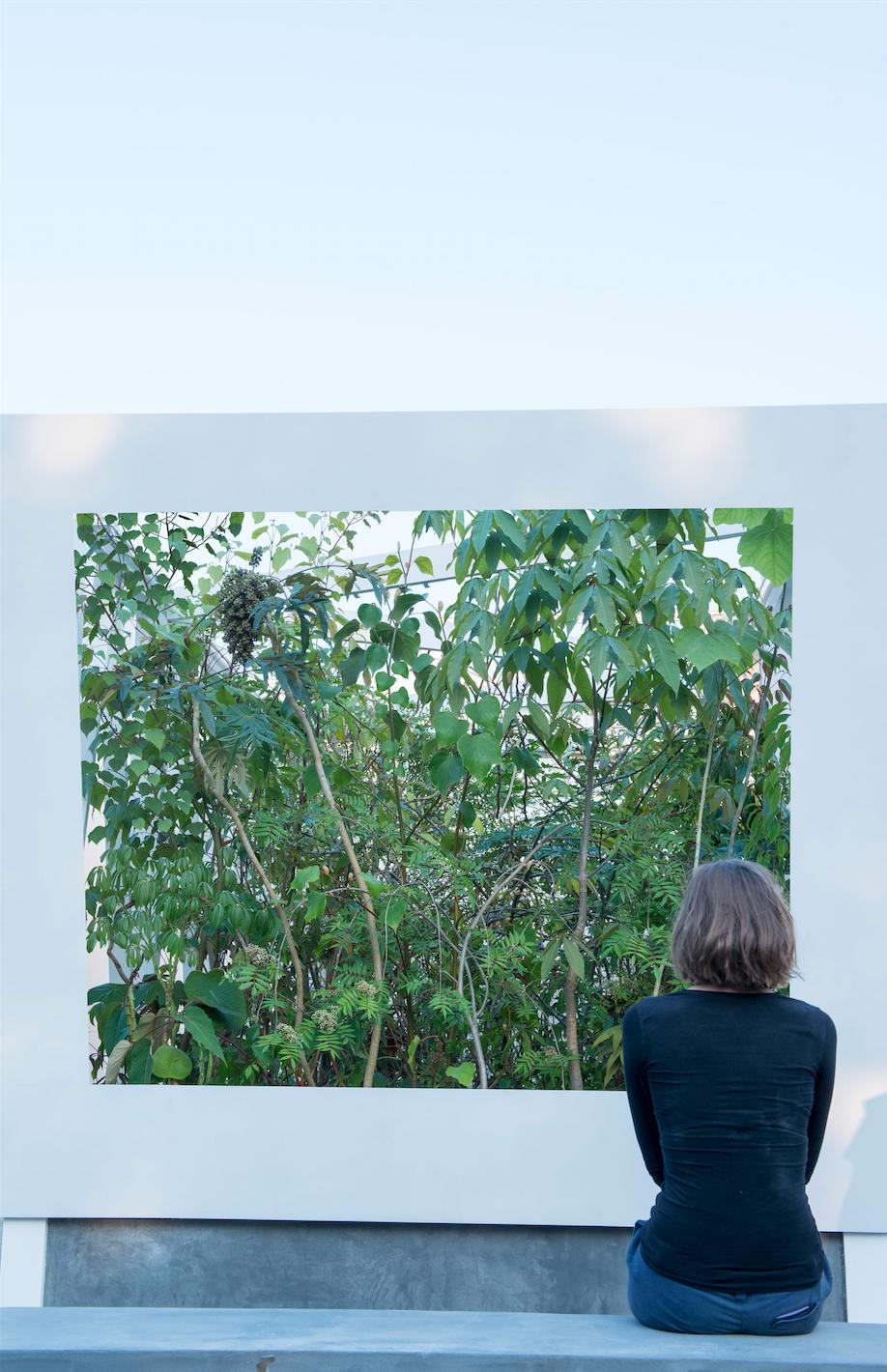 Looking into Cave Pavilion, Sophie Walker RHS Chelsea Flower Show / 2014