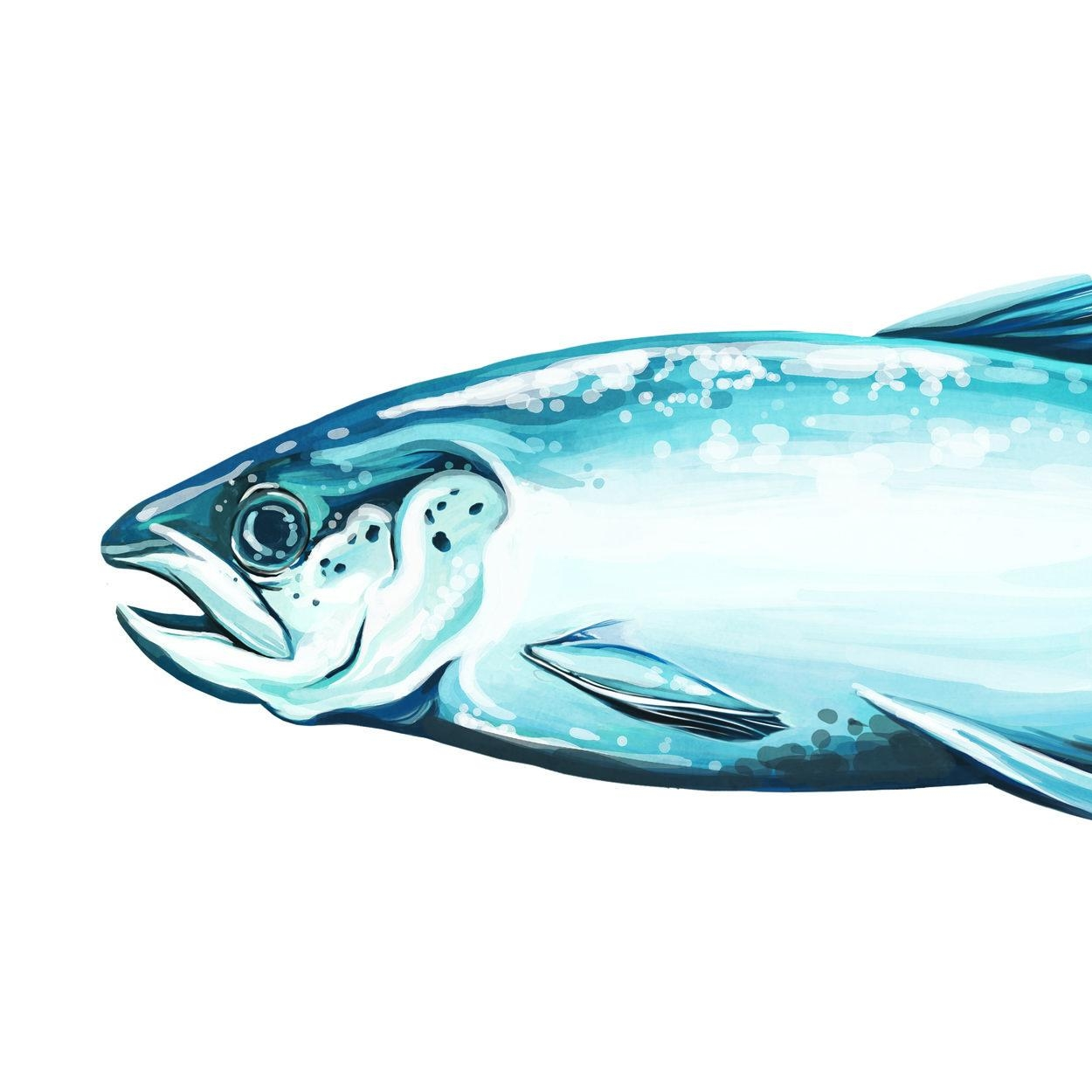 1.1 fish.jpg