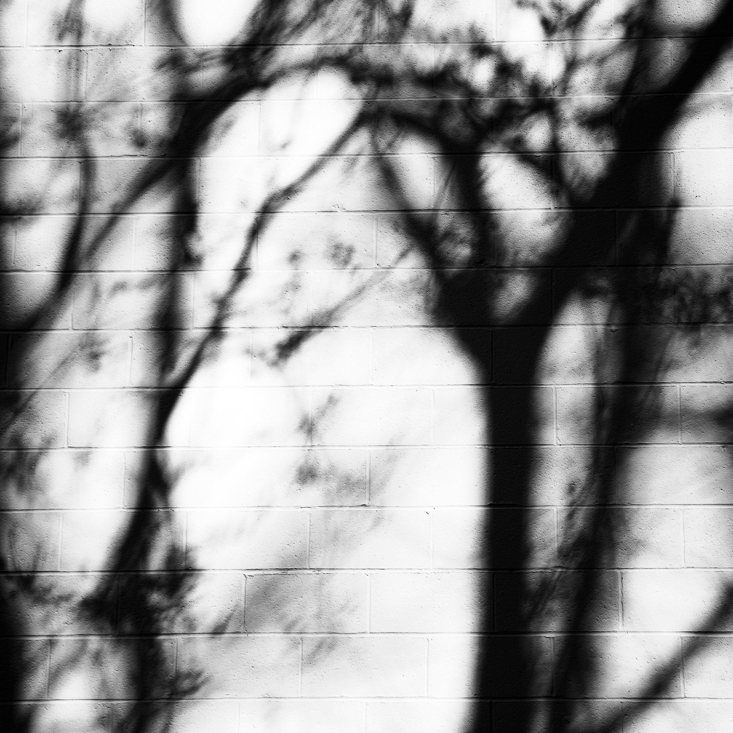 © Amelia Ingraham 2018