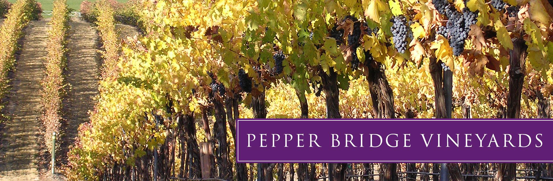 pb-vineyard-02.jpg