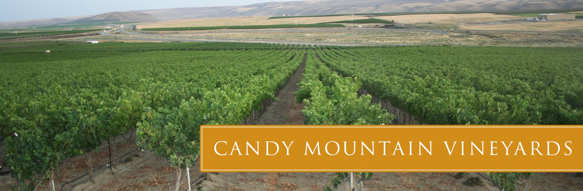 candy-vineyard-02.jpg