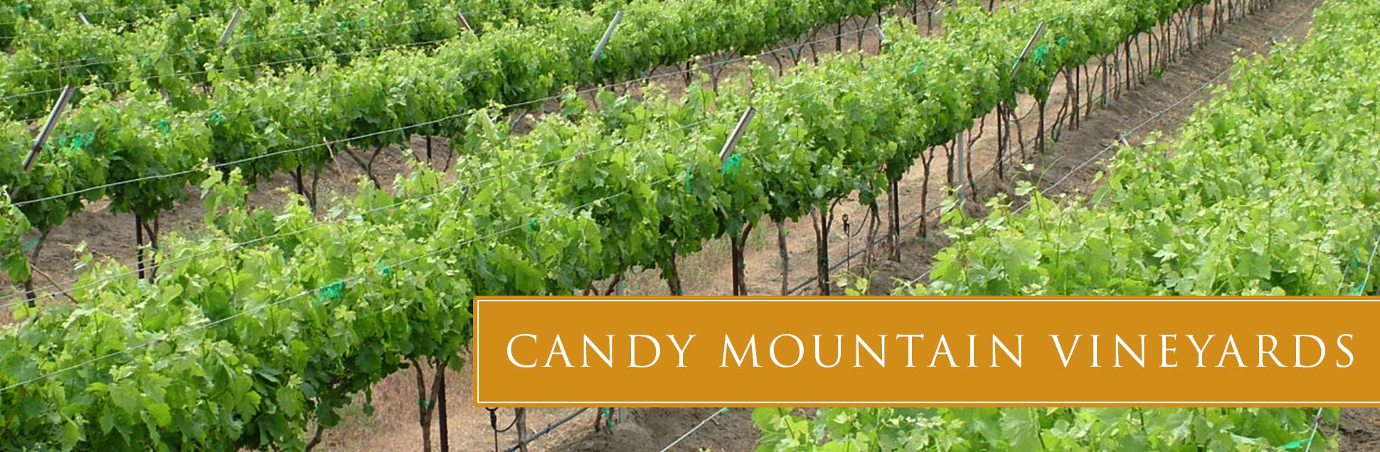 candy-vineyard-01.jpg