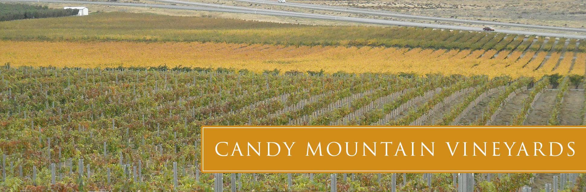 candy-vineyard-03.jpg