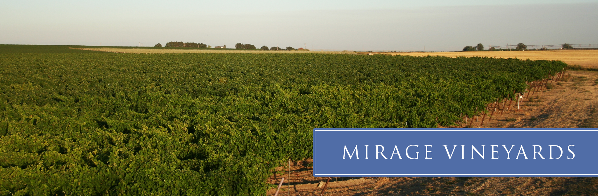 mirage-vineyard-02.jpg