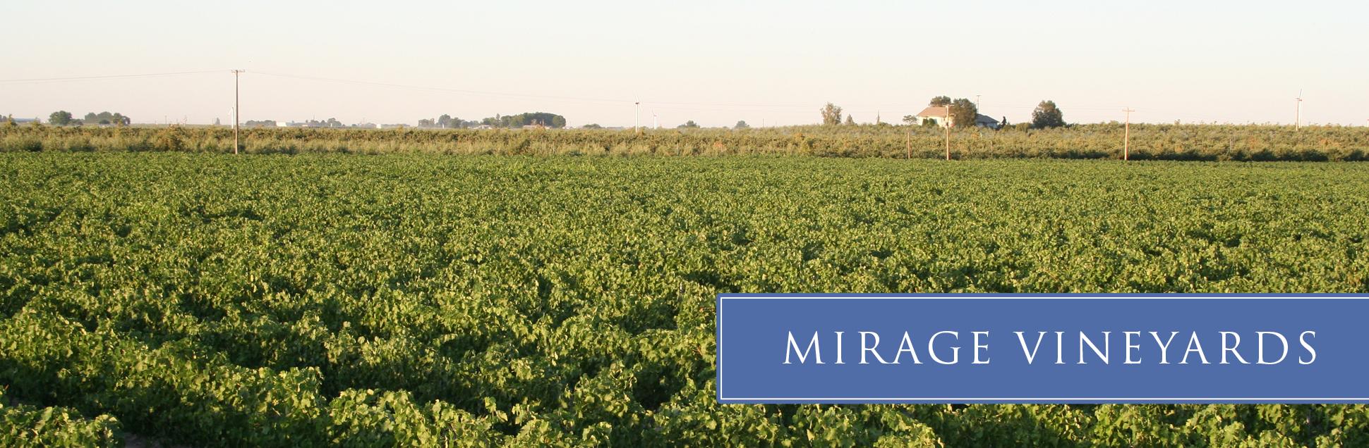 mirage-vineyard-06.jpg