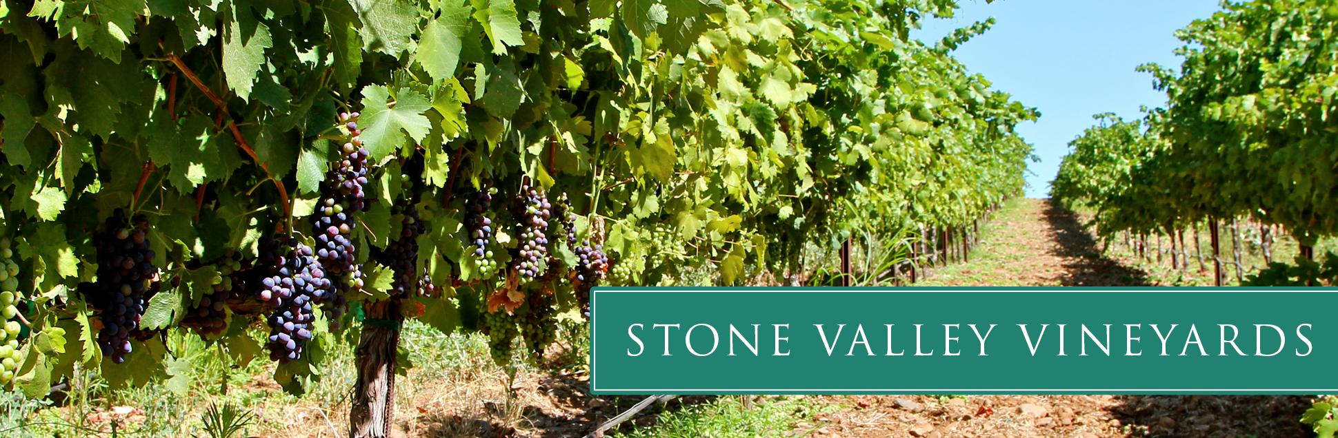 stone-vineyard-06.jpg