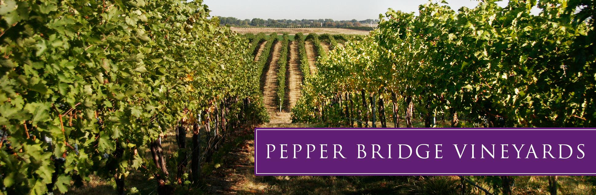 pb-vineyard-06.jpg