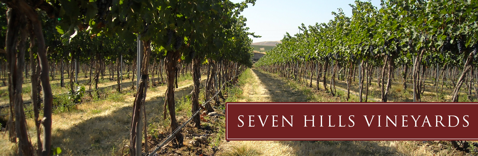 sh-vineyard-soil.jpg