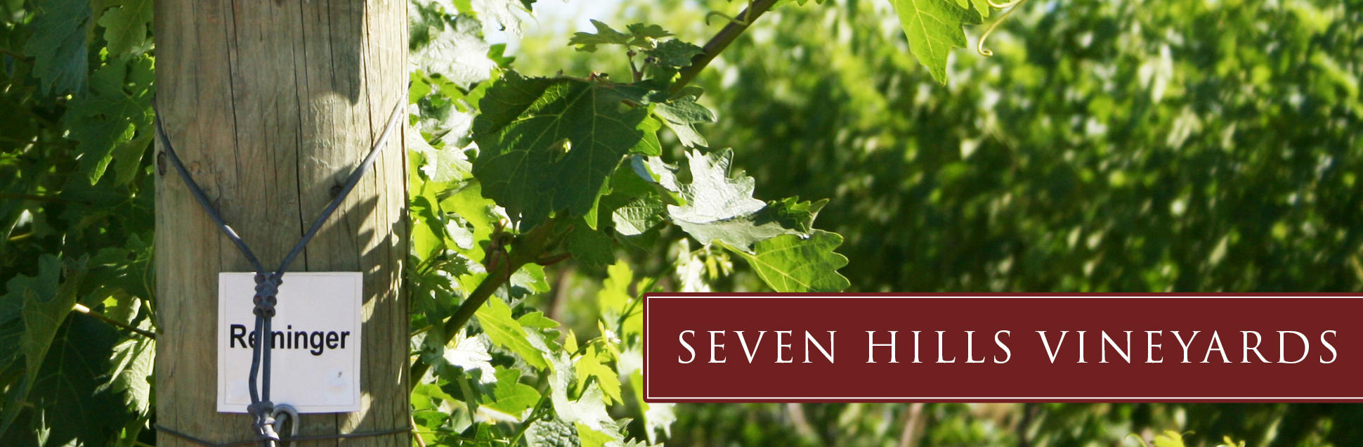 sh-vineyard-buyers.jpg
