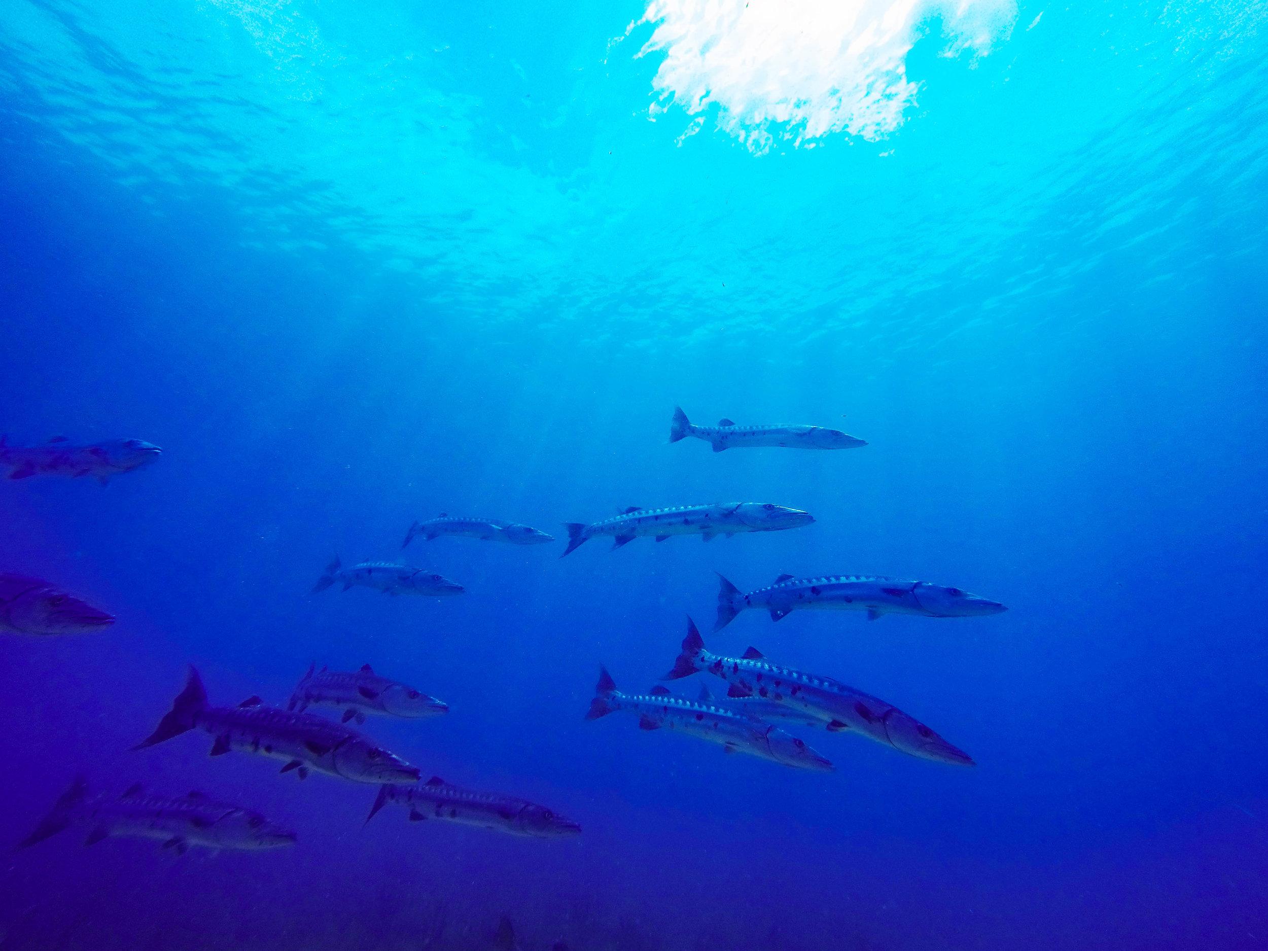 Anglers-Hotel-Reef-ve_steve-boxall-20150104_2825.jpg
