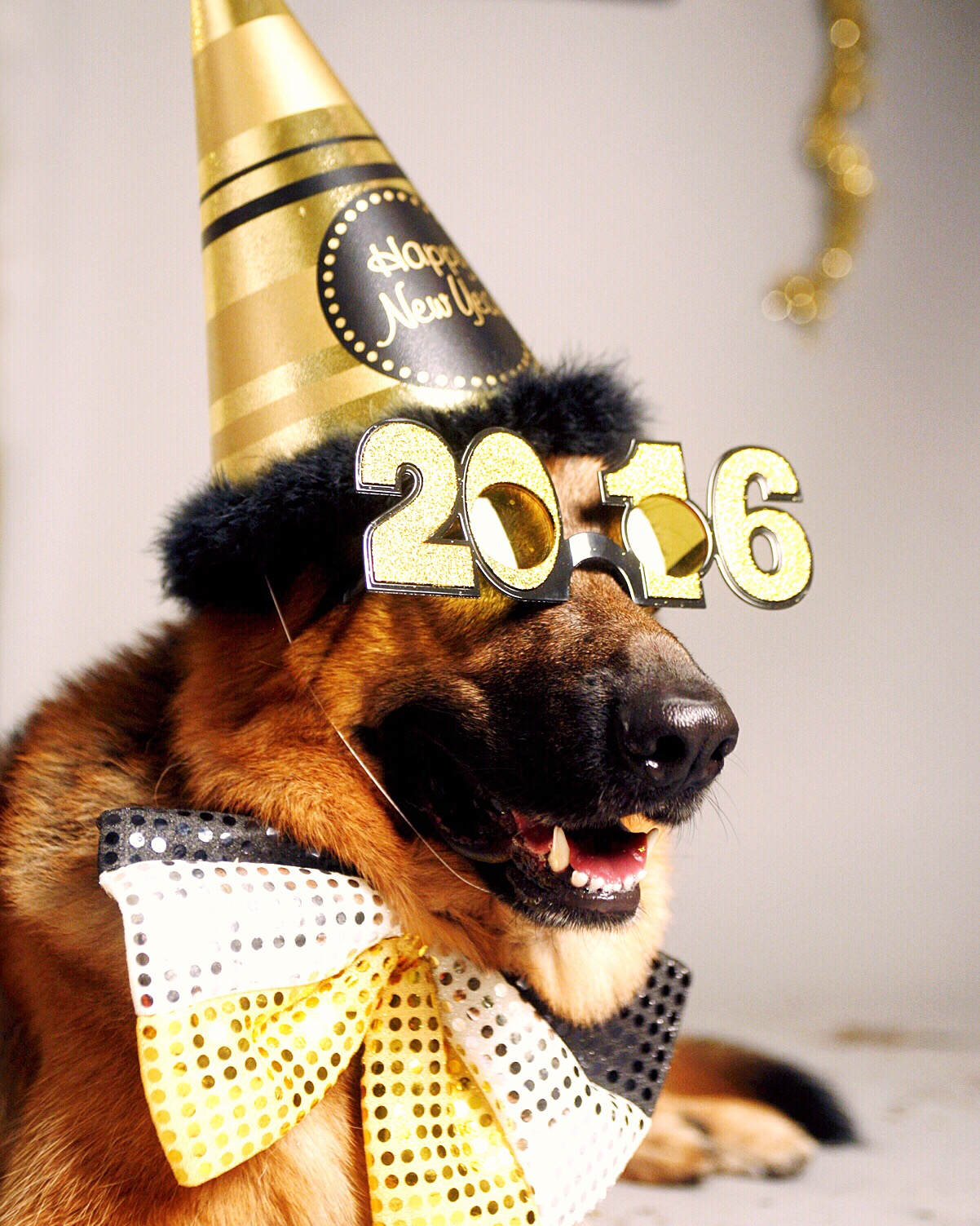 Happy New Year from MaQ!