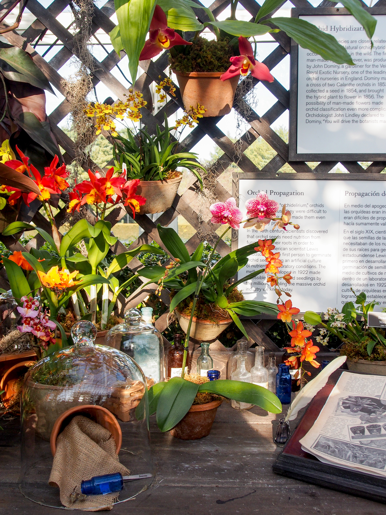 While exploring the Haupt Conservatory's exhibition, look for a 19th-century orchid propagation display featuring a copy of   Orchidaceae of Mexico and Guatemala  , a landmark work by Victorian horticulturist  James Bateman .