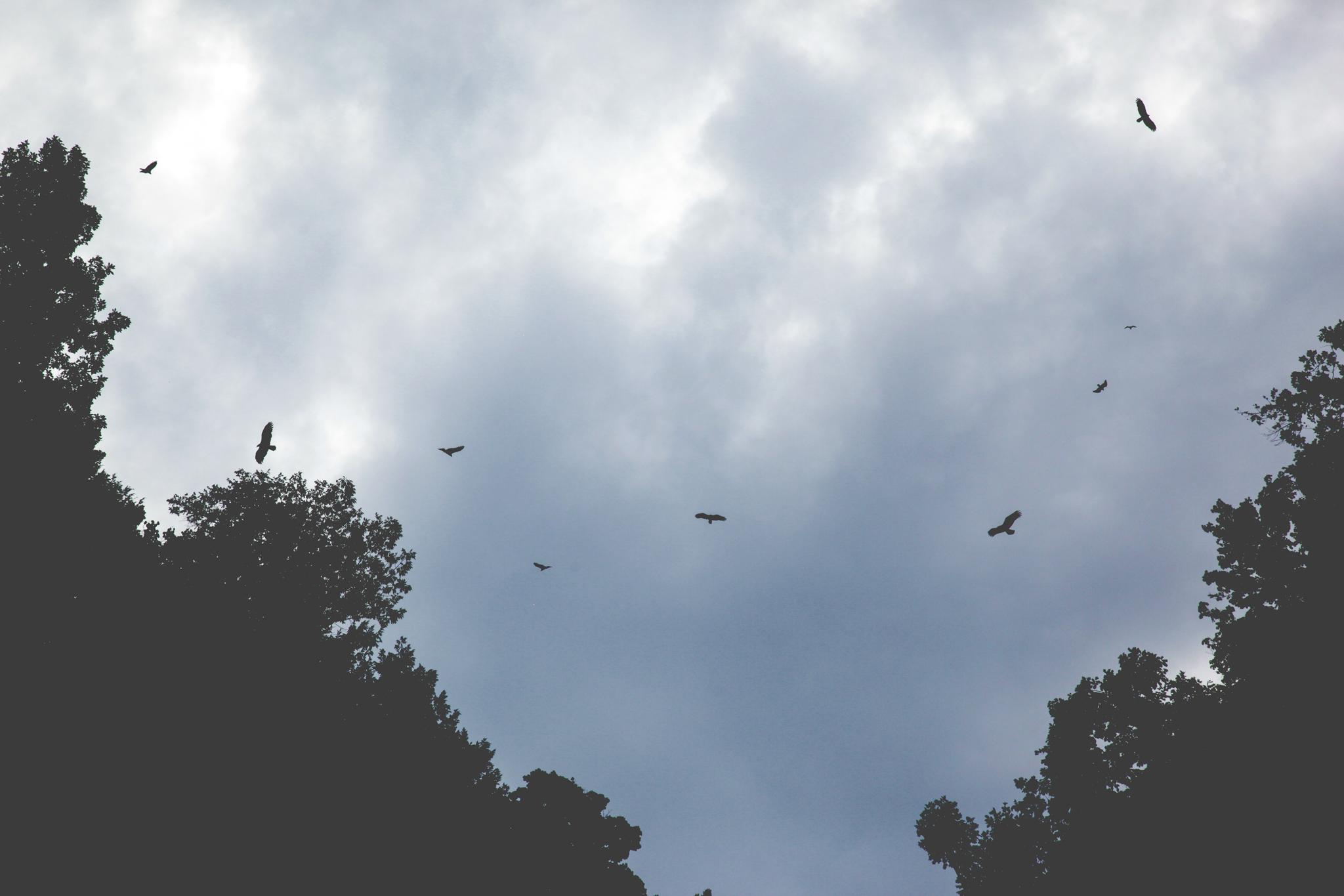 Hawks Taughannock Falls