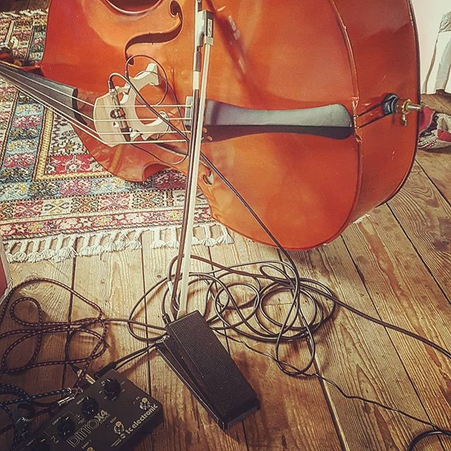 A double bass, an electric bass, a #tcelectronicdittox4, a #modduo. What creations will occur today?  #newcontent #musician #composer #yamahabass #markbass