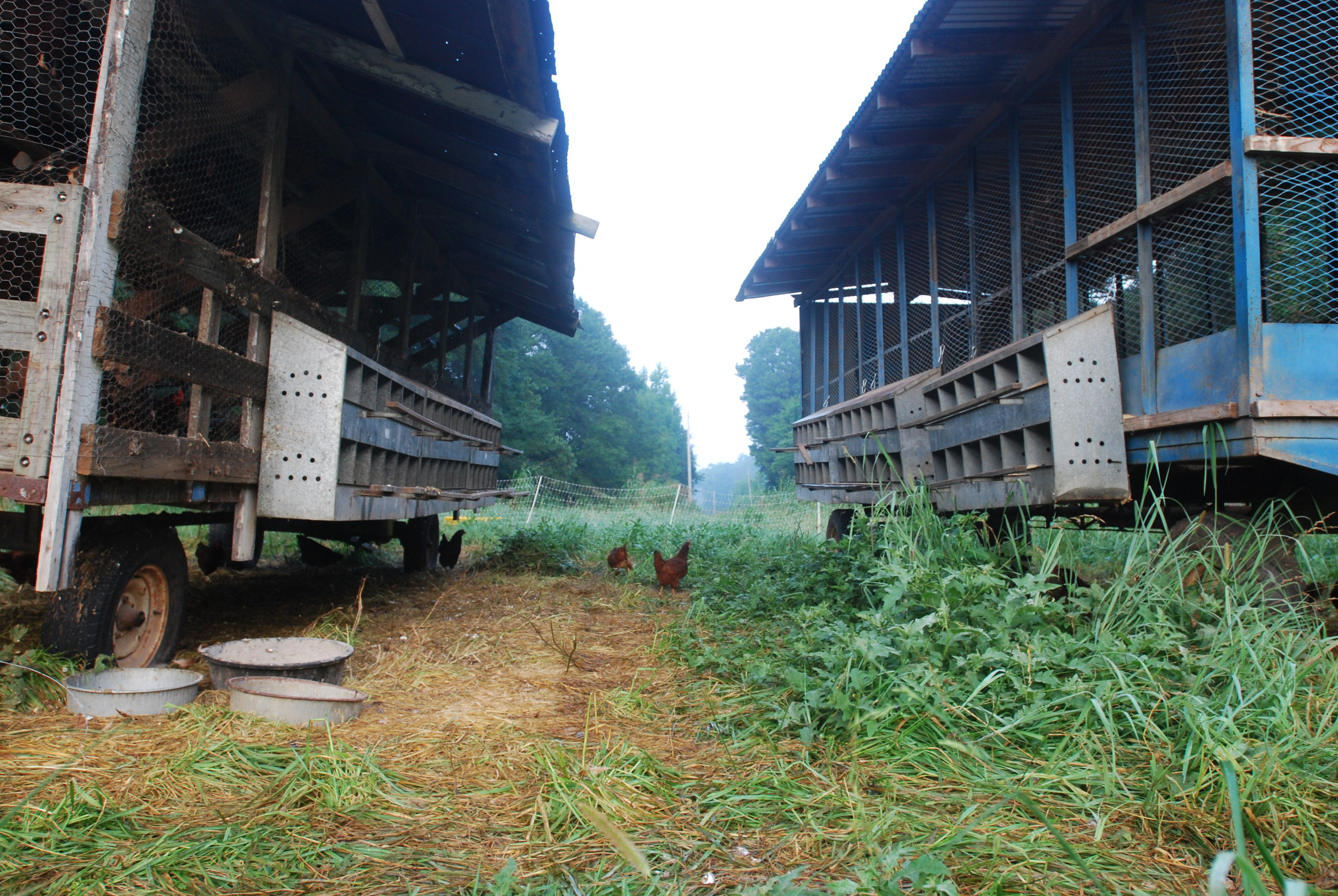 080913 MF Chicken Processing AG 3.JPG