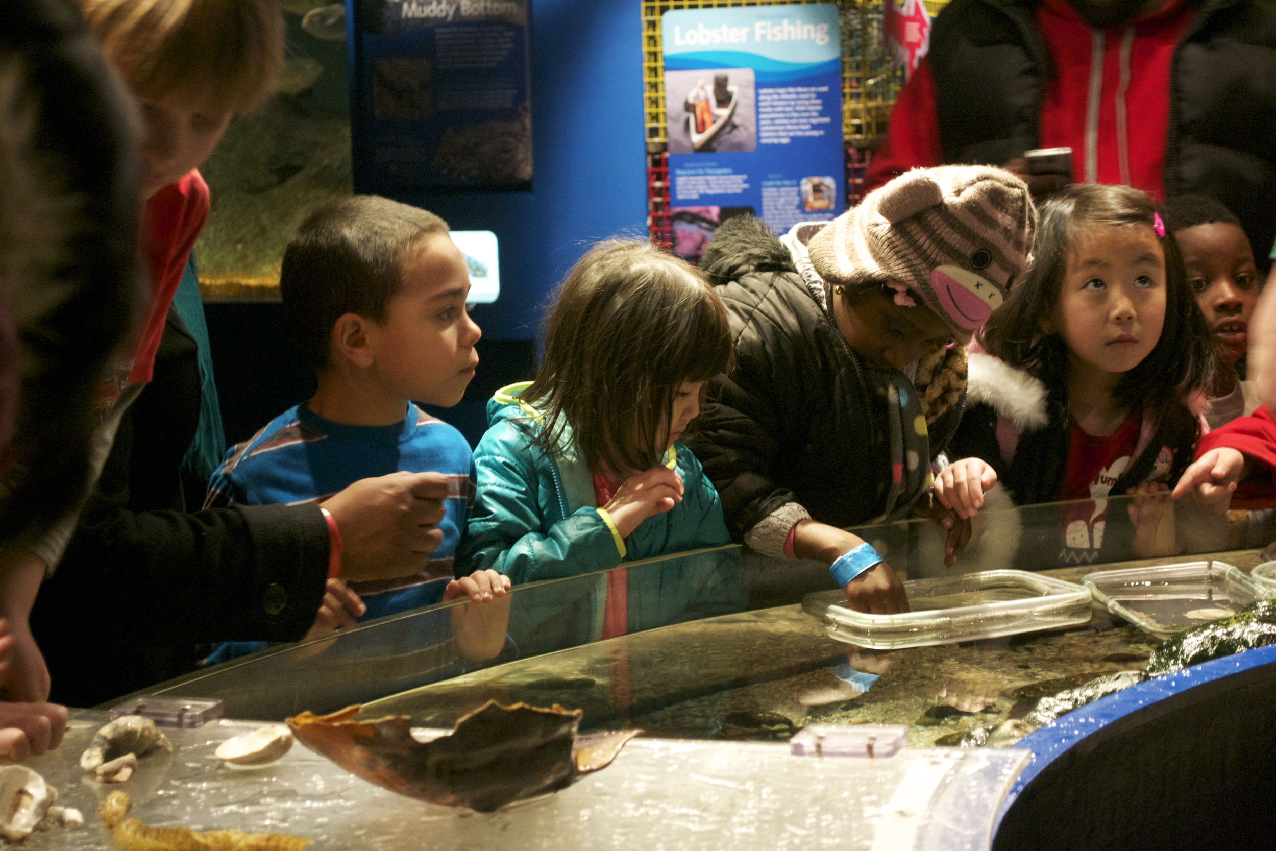 K-7th Grade Field Trip to Maritime Aquarium.