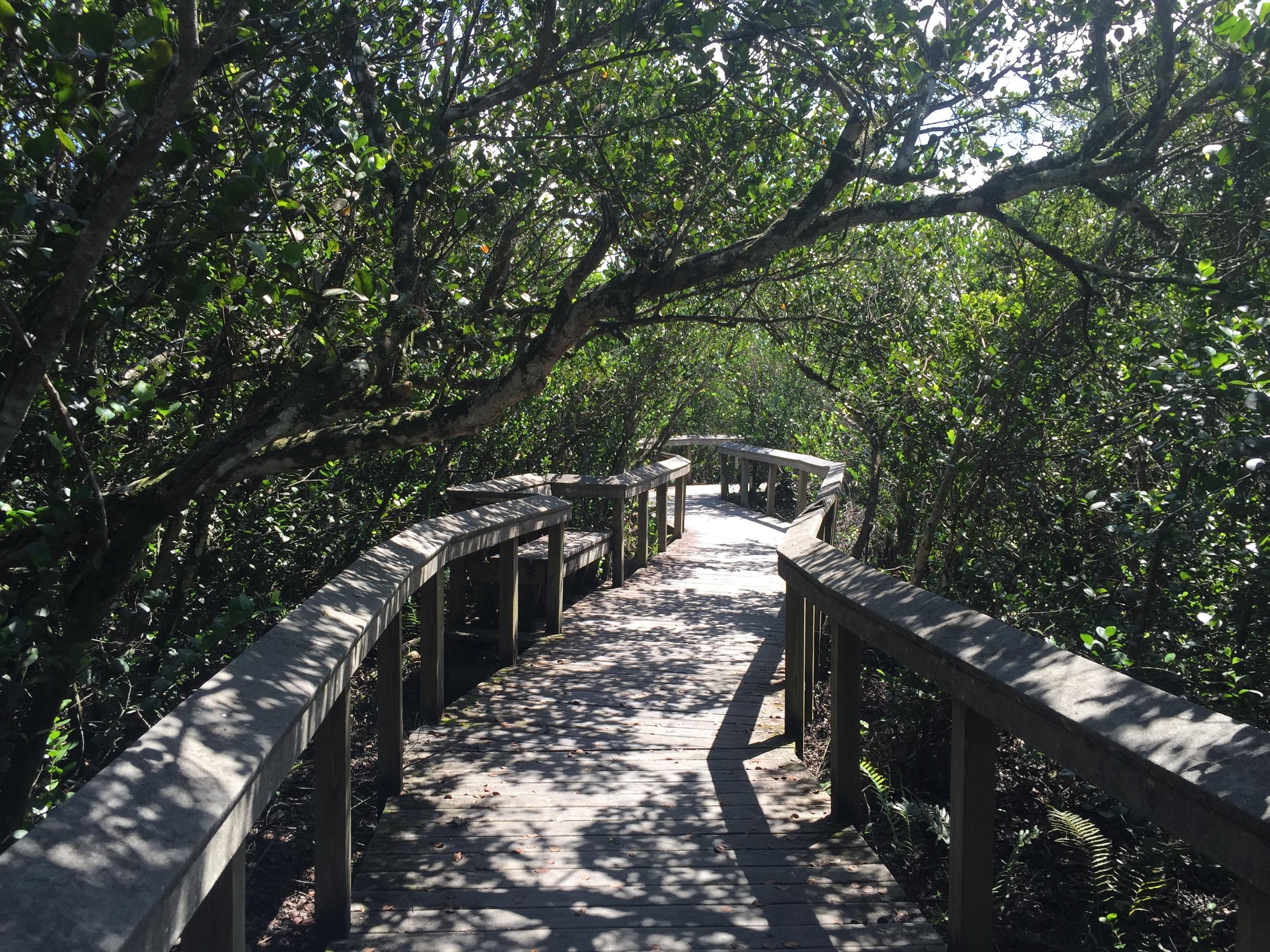 EVER - Bobcat Boardwalk 02.jpg