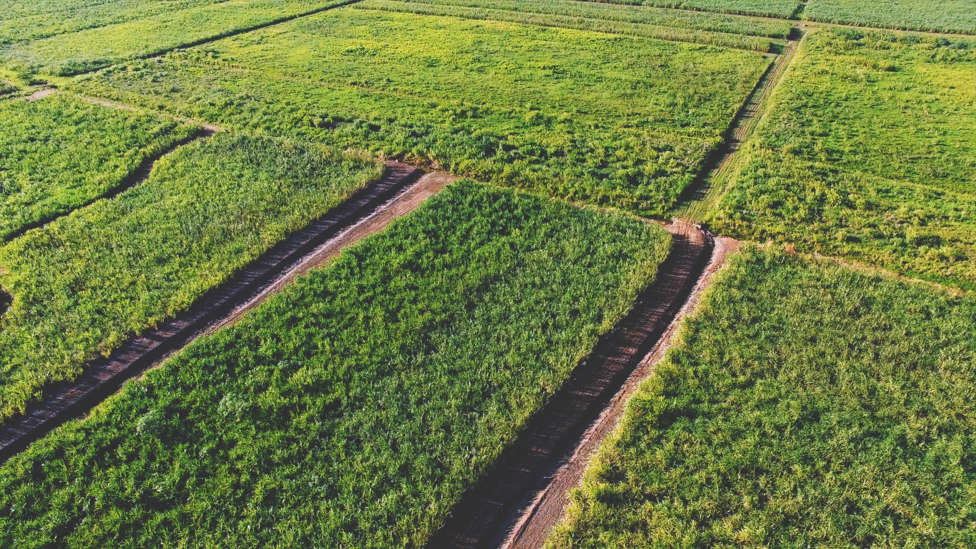 Cañaveral Aerial 1080.00_03_19_27.Still036.jpg