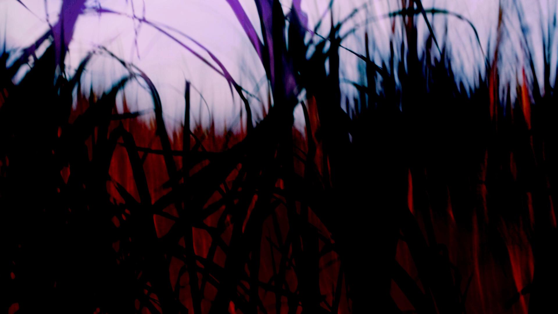 Cañaveral GH4.00_05_03_00.Still017.jpg