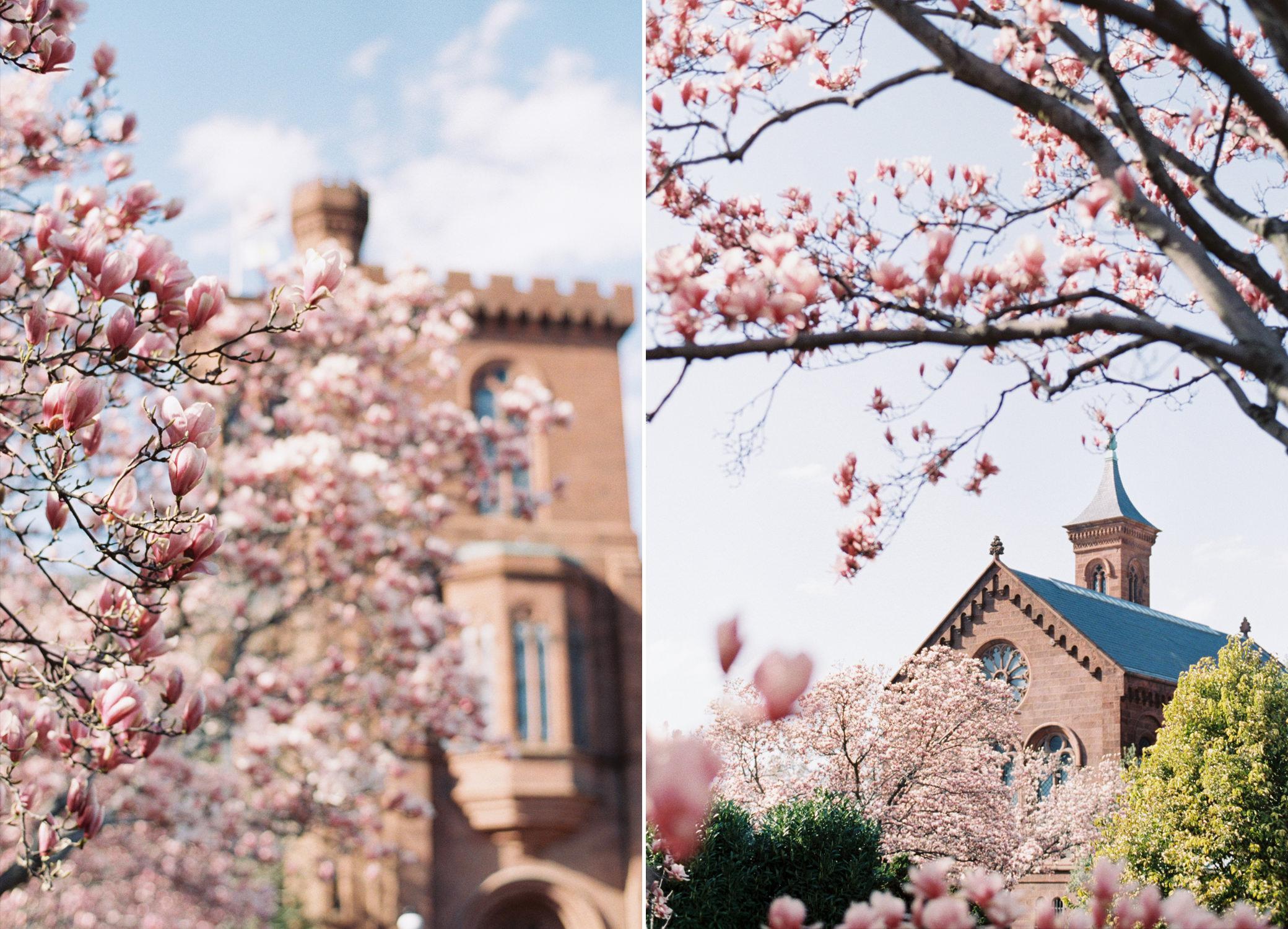 The Smithsonian in Washington DC, Spring 2014