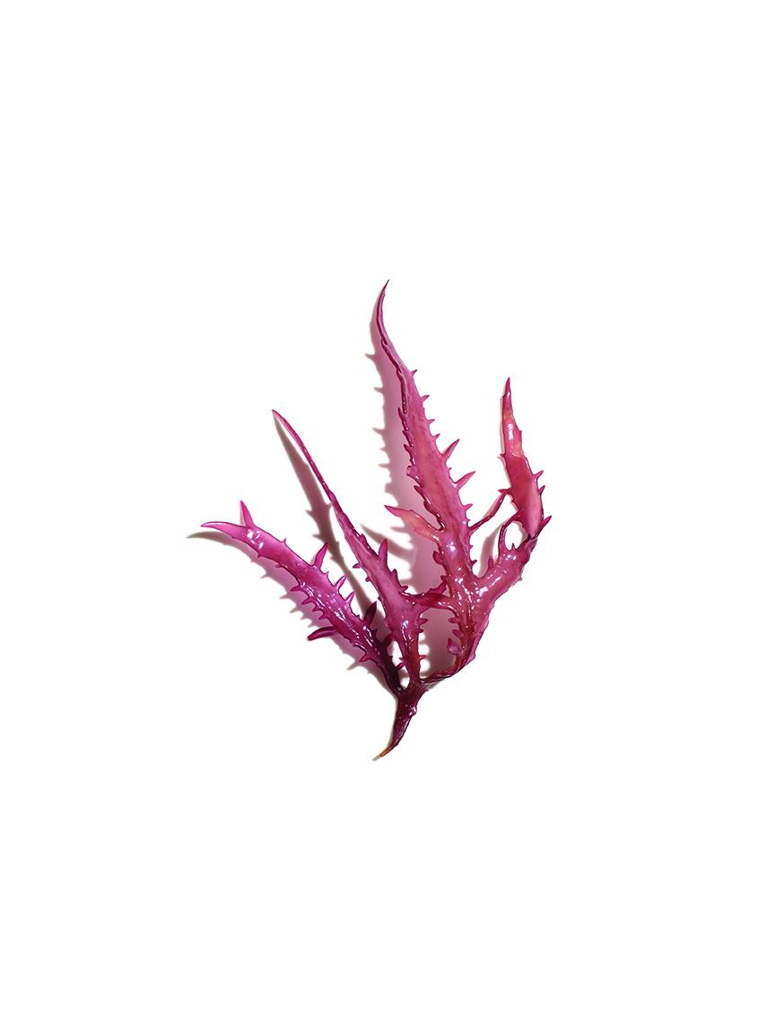 IN15_76_Japanese Seaweed.jpg