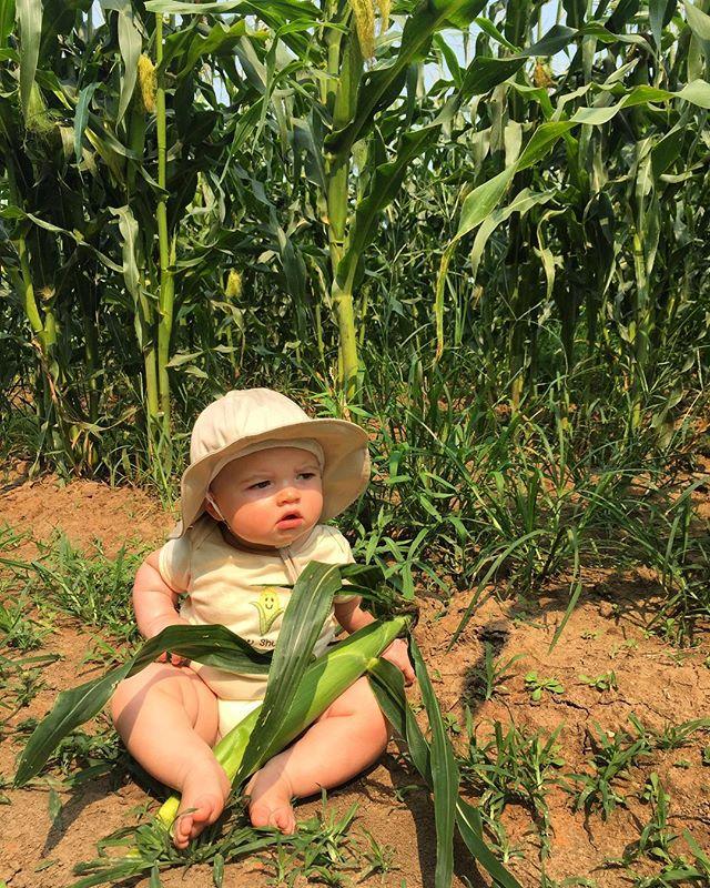 Kai will eat all the corns #claverachfarm #farmbaby