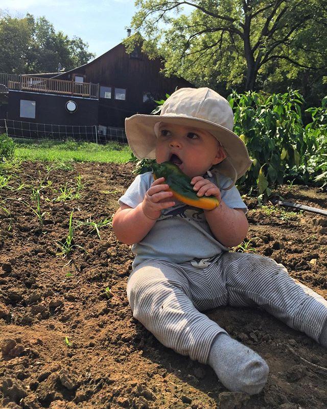Young Kai-zey in the pepper patch #farmbaby #clavetachfarm