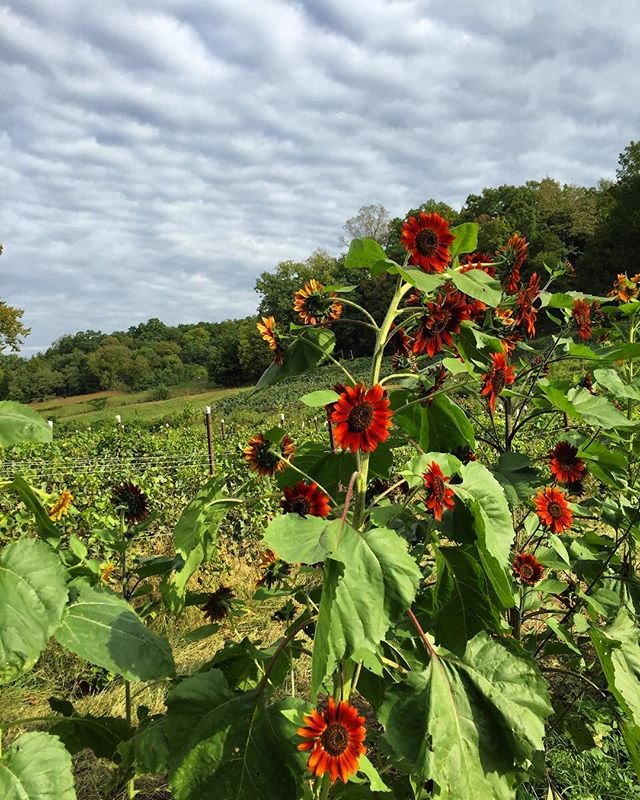 Fall on the farm! #claverachfarm