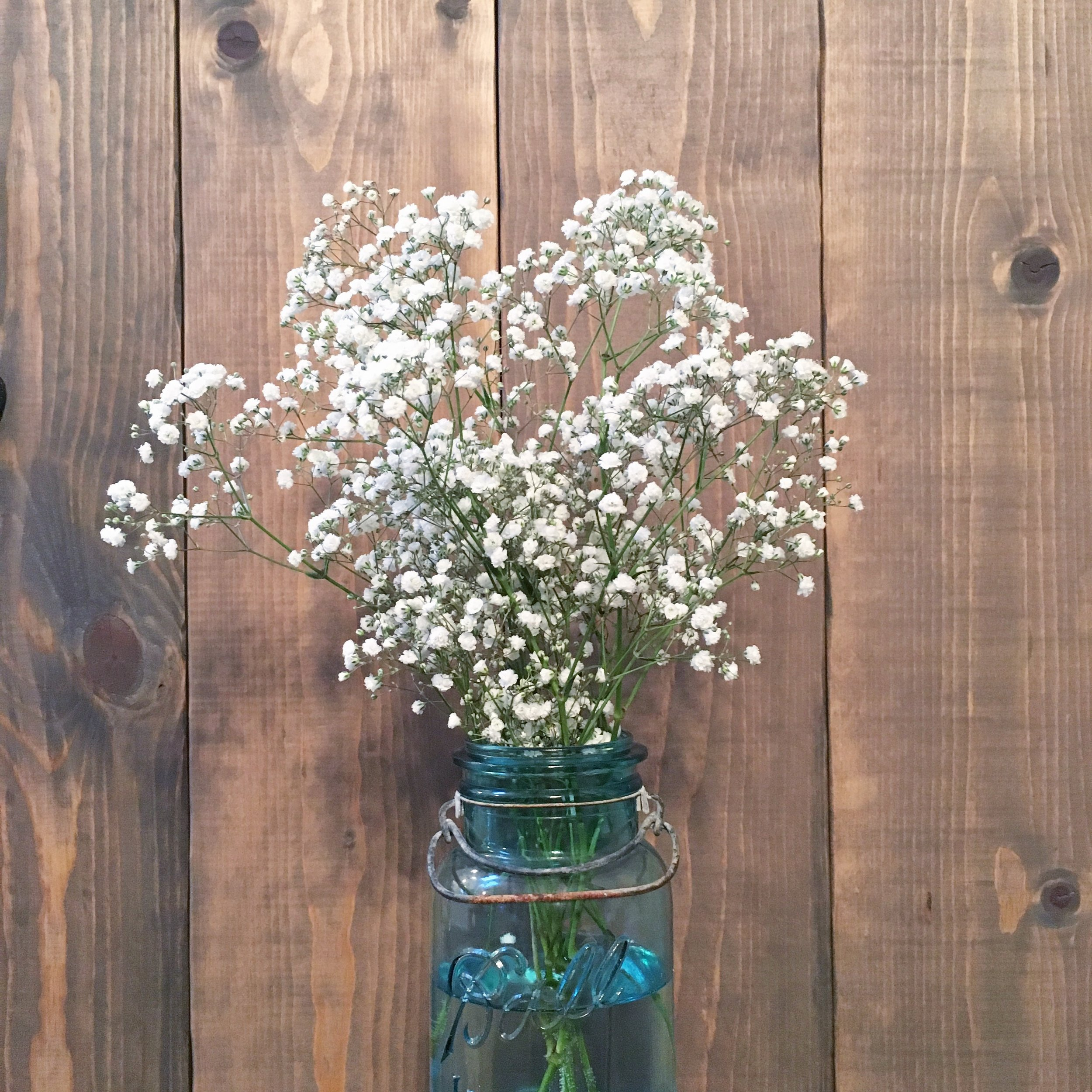 Sometimes you just need to buy yourself some baby's breath. Love the simplicity of these beauties!