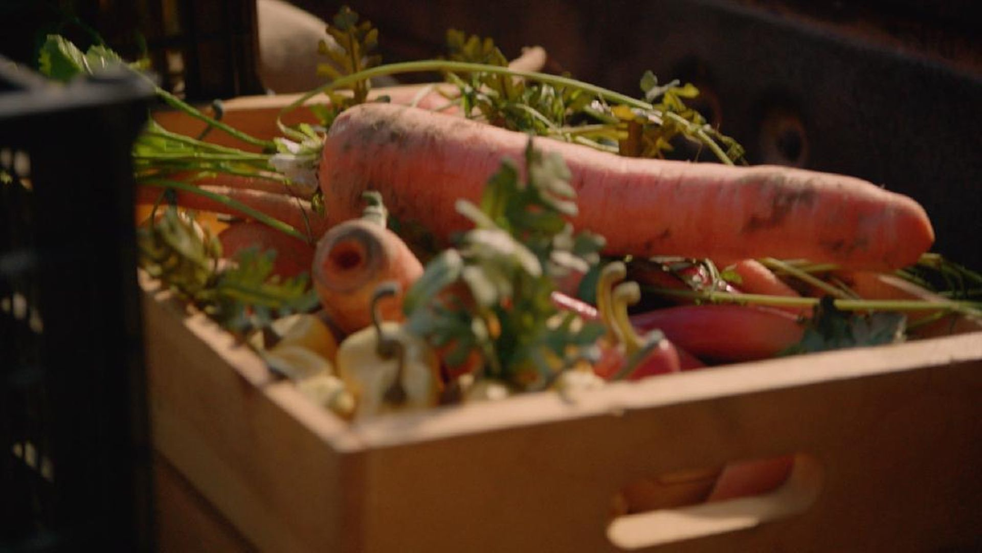 Food: The Source of Life    A carrot takes a dark and surprising journey as it makes its way from a country farm to an upscale restaurant. Food this fresh comes with a cost.