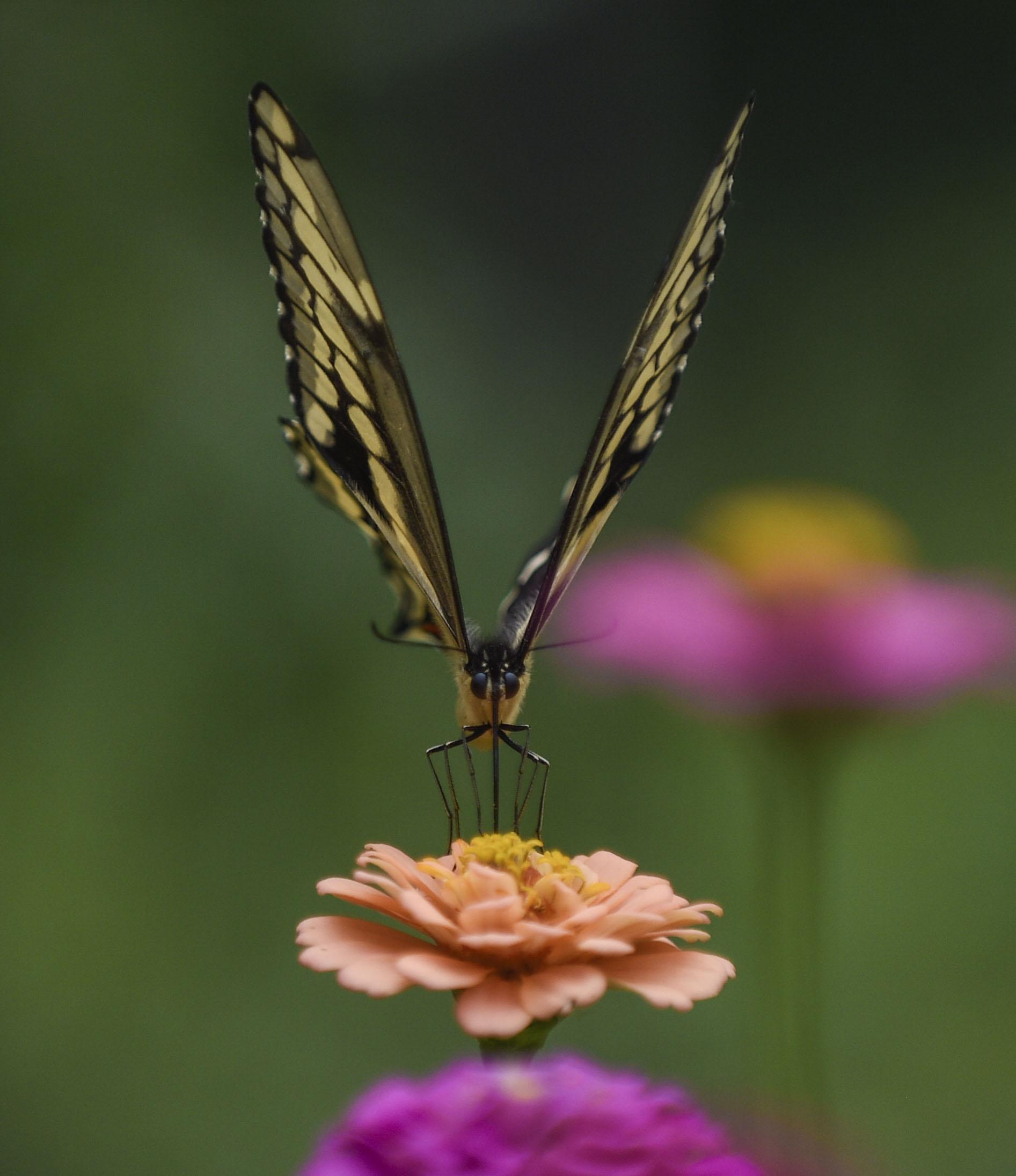 Butterfly01.jpg